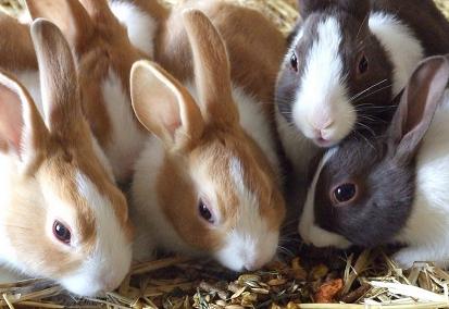 Bild Kaninchen fressen Körner