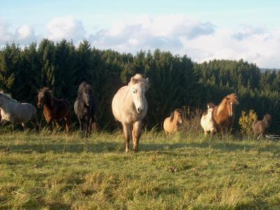 Bild Pferde auf Wiese
