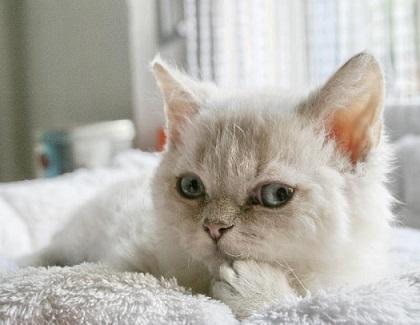 Bild entspannte Katze