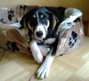 Bild Hund in Hundekorb
