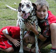 Kinder und Dalmatiner