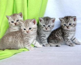 Katzenwelpen abzugeben