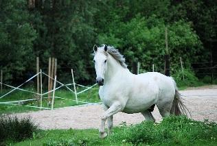 Wie Alt Werden Pferde Marktde