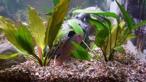 Umzug Aquarium Wasserpflanzen