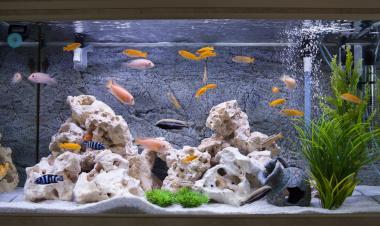 Fischzucht Wie Zuchte Ich Fische Im Aquarium Markt De