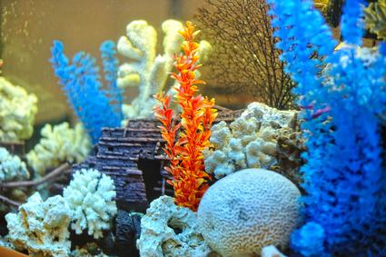 Bild vom Innenleben eines Aquariums