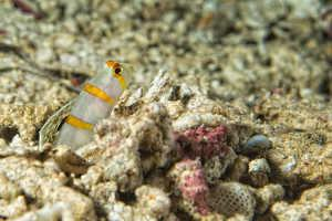Umzug Aquarium Bodengrund