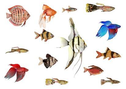 Bild von verschiedenen Fischen