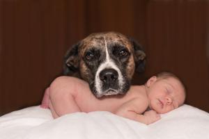 Hund legt Kopf auf Rücken des Babys