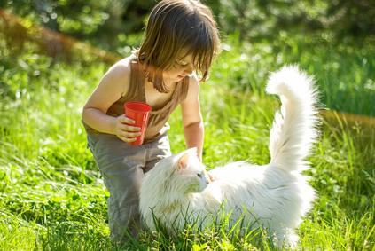 Katze und Kleinkind spielen in der Wiese