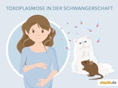 Grafik Toxoplasmose in der Schwangerschaft