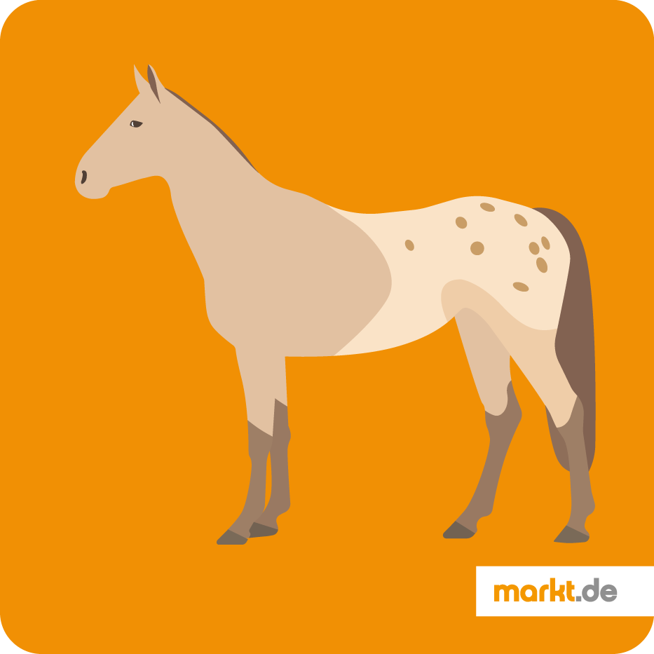 Grafik Appaloosa