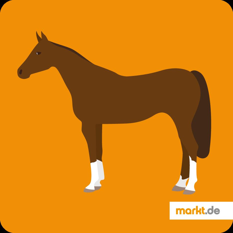 Pferderassen Von A Bis Z Mit Bild Im überblick Markt De