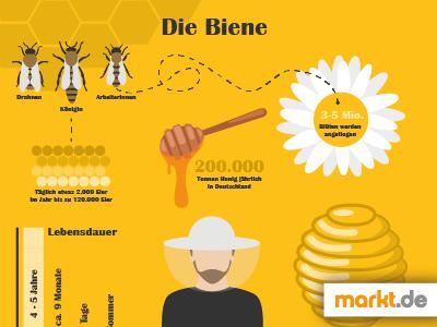 Infografik Bienen