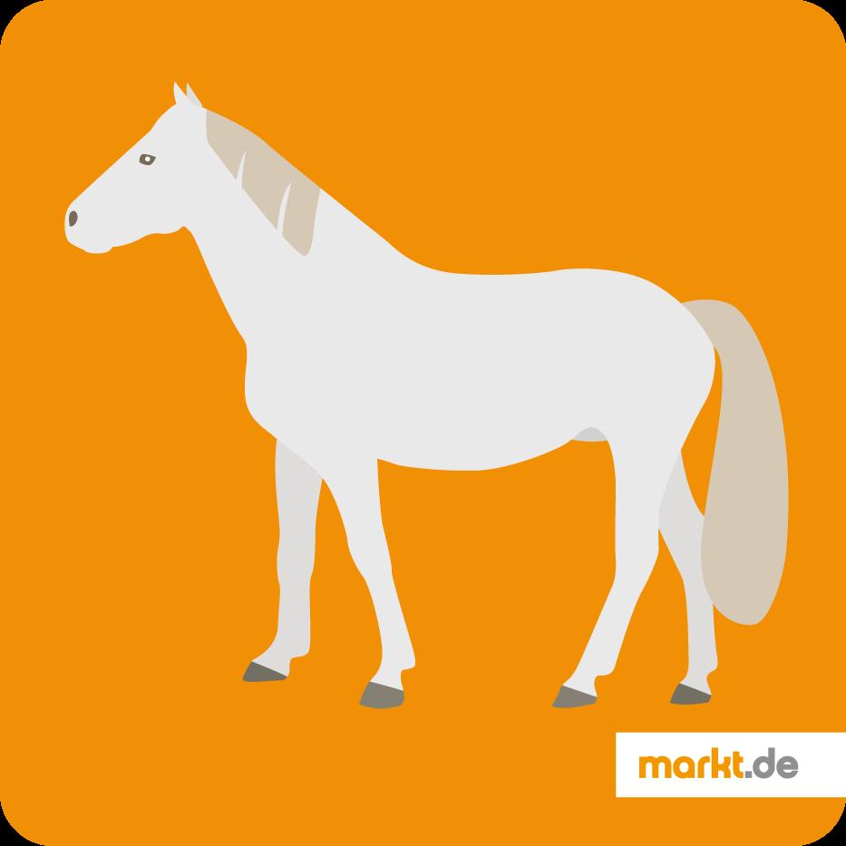 Camargue Pferd