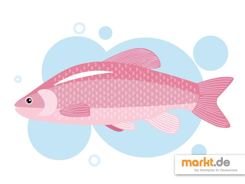 Beliebteste Fische F R Den Gartenteich