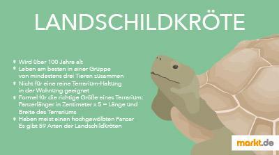 Landschildkröten Infografik