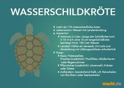 Wasserschildkröte Infografik