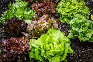 Bild Thüringer Kaninchen salat
