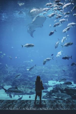 Bild Frau in Aquarium