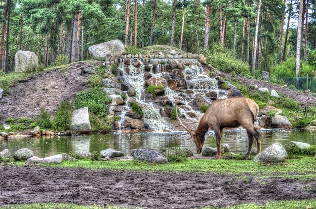 Bild Serengeti Park