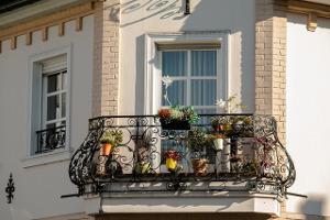 Bild Pflanzen für Balkon