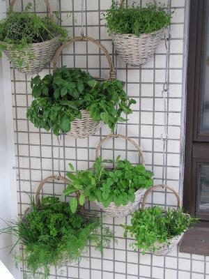 Bild Pflanzenhalerung Wand an Balkon