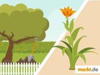 Grafik Bäume und Blumen im Garten