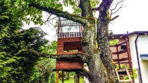Bild Baumhaus In Baum