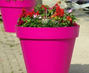 Bild pinker Blumentopf