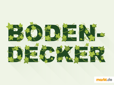 Grafik Bodendecker