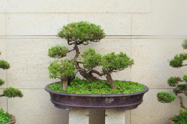 japanische pflanzen exoten f r ihren garten. Black Bedroom Furniture Sets. Home Design Ideas
