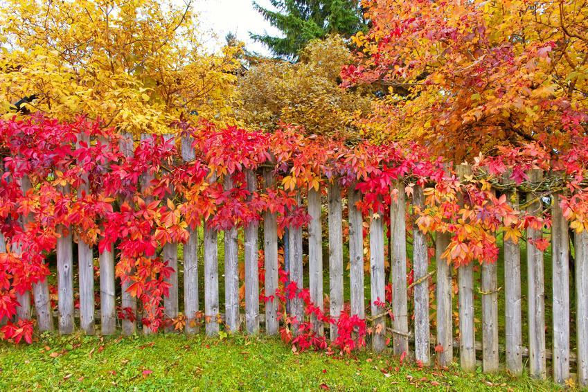 Bäume im Herbst