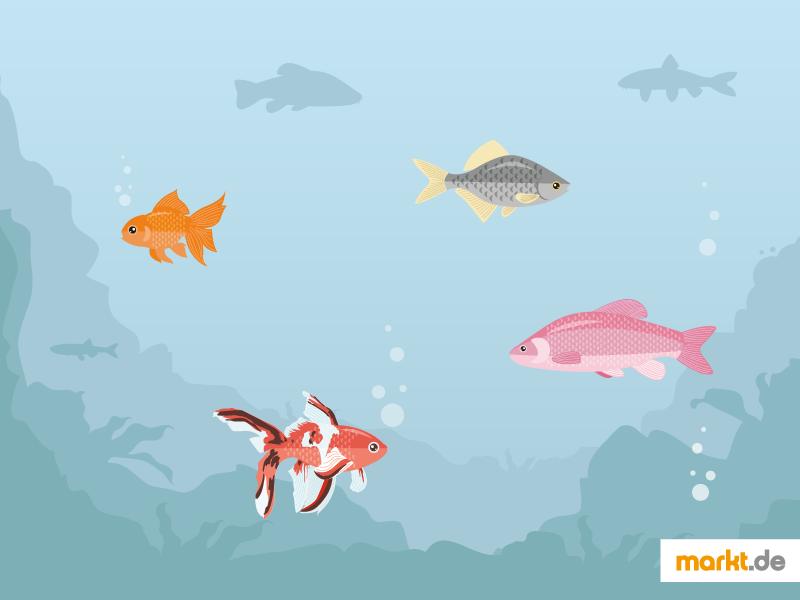 Beliebteste fische f r den gartenteich for Fische gartenteich geeignet