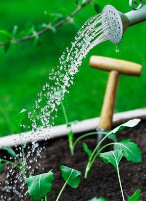Garten anlegen pflegeintensiv