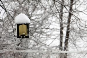Bild Garten mit Schnee und Vogelhaus