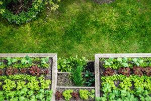 Bild Gemüsebeet anlegen Garten Tipps
