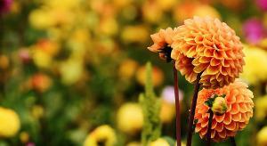 Bild Blume Herbst