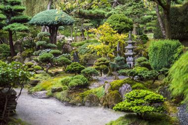 Bild Japanischer Garten in verschieden Grüntönen