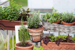 Bild Kräuter anpflanzen Balkon