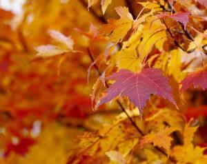 Bild Herbstlaub Oktober