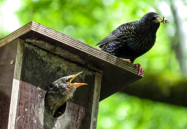Bild Vögel und Nistkästen