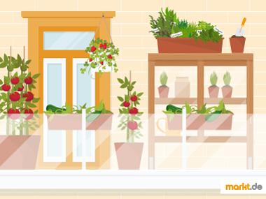 Grafik Nutzpflanzengarten Stadt / Balkon