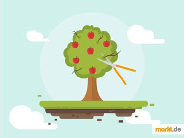 Grafik Obstbäume richtig schneiden