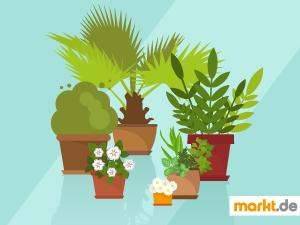Grafik unterschiedlichen Pflanzen und Kräuer