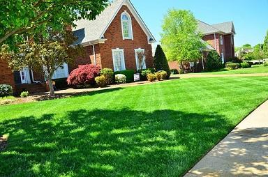 Bild Garten mit perfektem Rasen