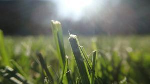 Bild Rasen Sonne