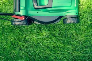 Bild Rasenmäher Gras