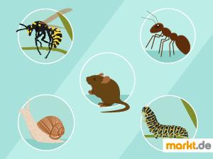 Grafik verschiedene Tiere im Garten