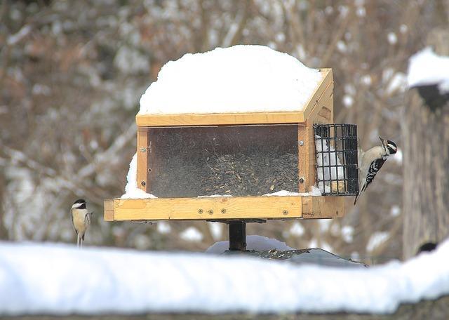 Bild Vogelhaus mit Schnee